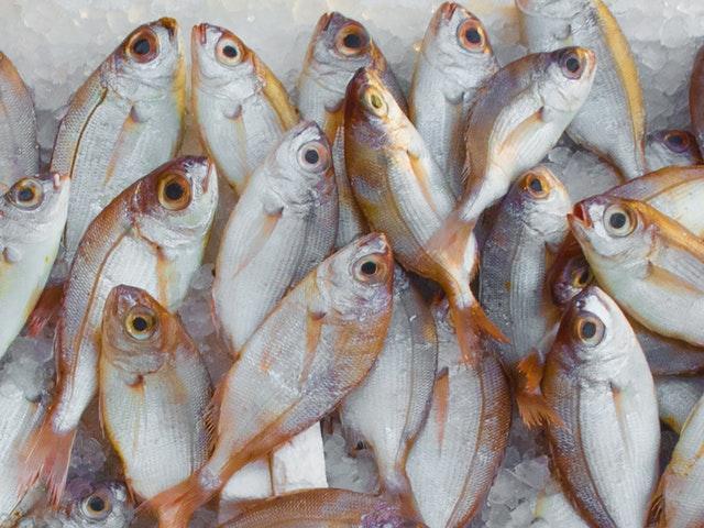 Makanan Seafood untuk Penderita Penyakit Diabetes